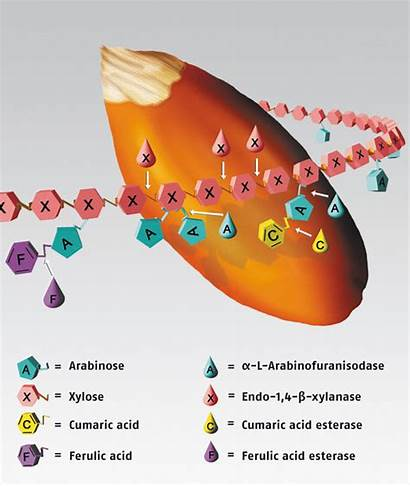 Enzymes Enzyme Industry Window Close Illustration
