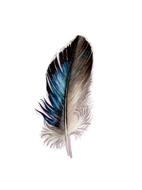 Mallard Feather Original Watercolor feather study by ...