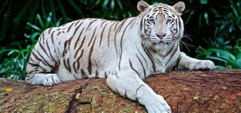 los animales mas bonitos del mundo top   imagenes