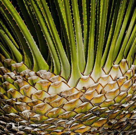 3 desert plants desert plants pictures www imgkid com the image kid has it