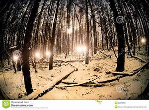 Mystical Forest Royalty Free Stock Photo - Image: 22919365