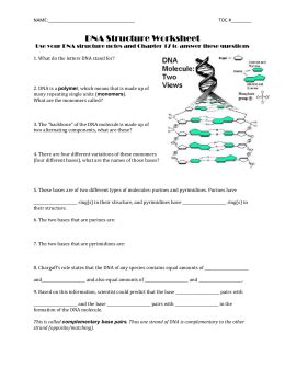 12 1 dna worksheet answers worksheets for all