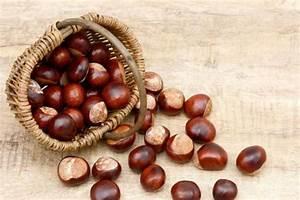 Faire Fuir Les Araignées : l 39 huile essentielle de marron d inde pour les faire fuir 8 rem des anti araign es la maison ~ Melissatoandfro.com Idées de Décoration
