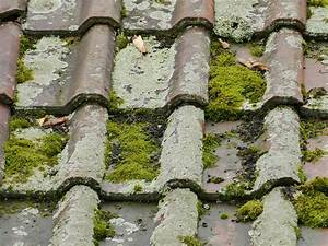 Anti Mousse Et Hydrofuge 2 En 1 : d mousser son toit comment nettoyer et entretenir une toiture ~ Melissatoandfro.com Idées de Décoration