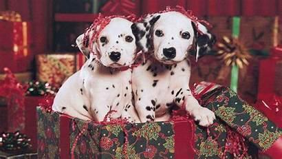 Christmas Puppies Wallpapers Puppy Background Santa Desktop