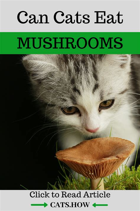 Can cats eat oyster mushrooms