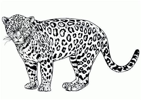 african animals coloring pages coloring pages