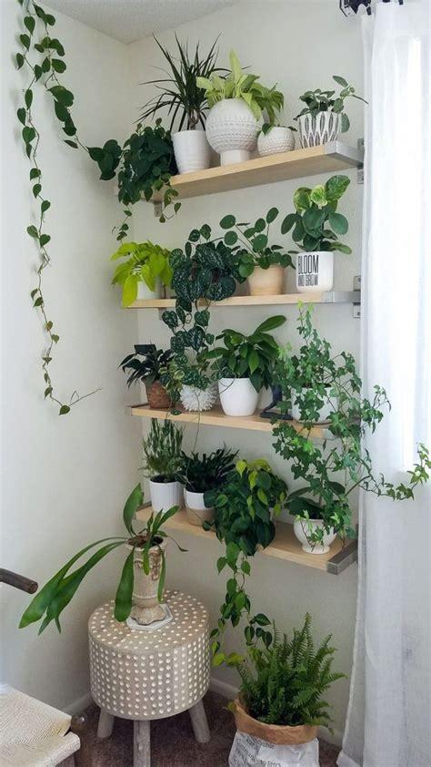 idees pour creer  mur vegetal interieur plants indoor design plants easy house plants