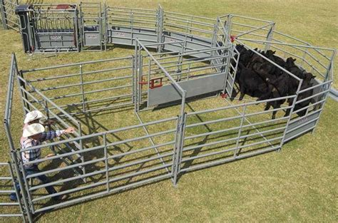 cattle corral working designs system ww handling systems equipment sweep tubs chute livestock alley sorting gate complete