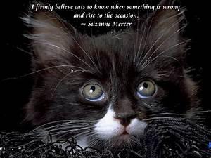 Cute Kittens Quotes. QuotesGram