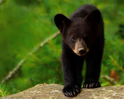 Who's Bringing The Picnic Then? Black Bear Cubs Were In
