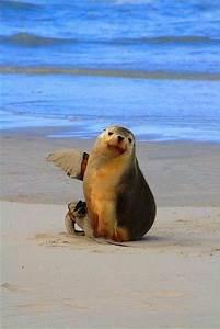 198 best images about Penguins, Polar Bears, Walruses, Sea ...