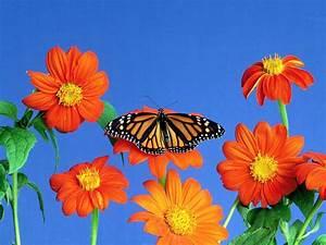 Paisajes de Ensueño: Paisajes de Flores NATURALEZA Pinterest Naturaleza, Flores y Flores
