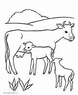Coloring Pages Cows Herd Cattle Ages Recognition Creativity Develop Skills Focus Motor Way Fun sketch template