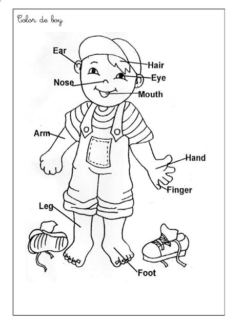 coloring pages  body parts  preschoolers