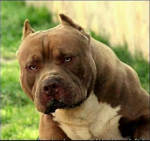 91 best Scary Dogs images on Pinterest | Dogs, Huge dogs ...