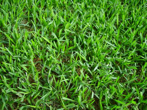 Seasonal Lawn Maintenance Guide For Atlanta, Ga