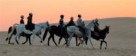 riding horse dubai uae
