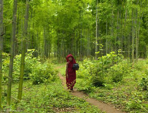 emerald forest myanmar fine art photography  world