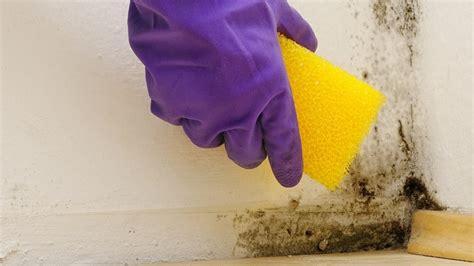 moisissure salle de bain traitement des moisissures dans la salle de bain renowizz be