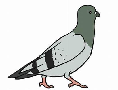 Pigeon Clipart Clip Google Gifs Funny Transparent