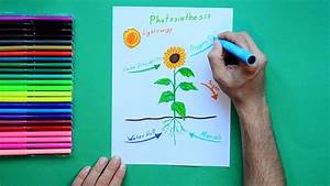 How To Draw Photosynthesis - Labeled Science Diagrams