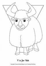 Yack Activityvillage Yaks sketch template