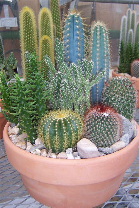 cactus garden cute cactus garden cactuses pinterest