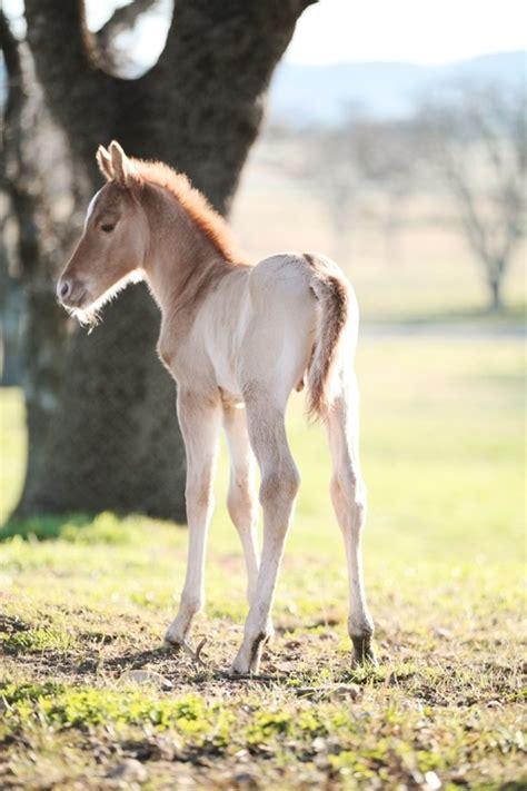 foals images  pinterest