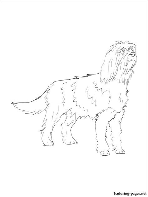 otterhound coloring page coloring pages