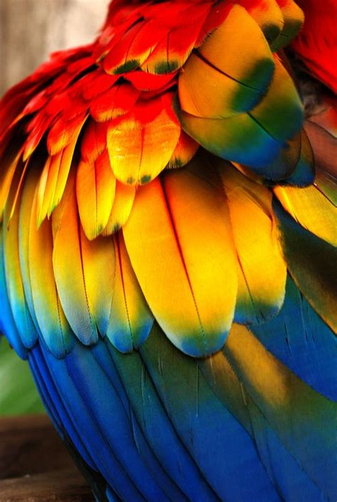 bird with colorful feathers 25 best ideas about colorful feathers on