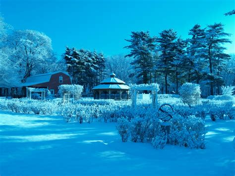 blue garden blue winter rose nature winter hd desktop