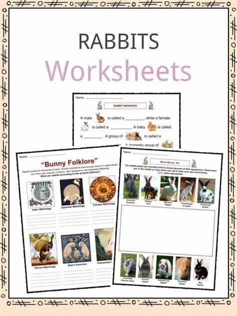 rabbit facts worksheets specie information  kids