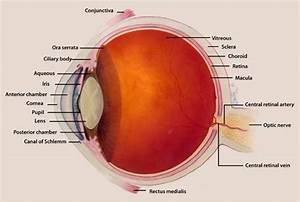What Eye Problems And Conditions Are Associated With Lupus