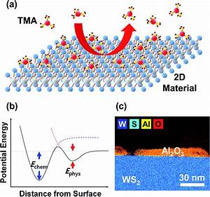 Atomic Layer Deposition Of Al 2 O 3 On Mos 2   Ws 2   Wse