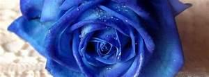 Blue Flower Facebook Cover - CoversDen