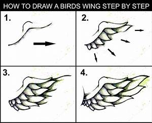 DARYL HOBSON ARTWORK: How To Draw A Wing: Step by step Art ...