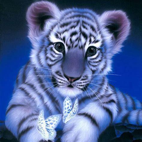 harimau putih wallpaper hd moa gambar