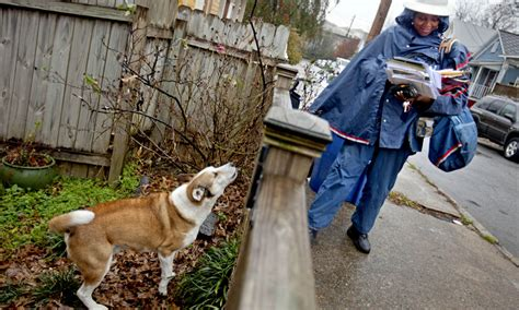 dog bites mailman   cities  dogs attack