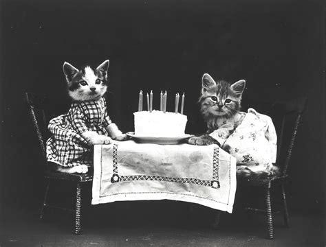 old white land フリー画像素材 動物 哺乳類 猫 ネコ 子猫 仔猫 誕生日 ハッピー バースデー モノクロ