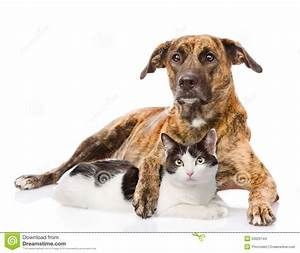 Mixed Breed Dog Hugging A Cat. Isolated On White ...