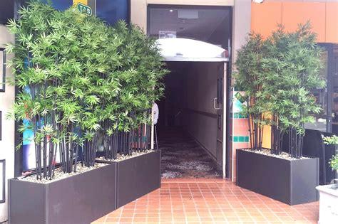bankstown hotel sydney silk trees  plants