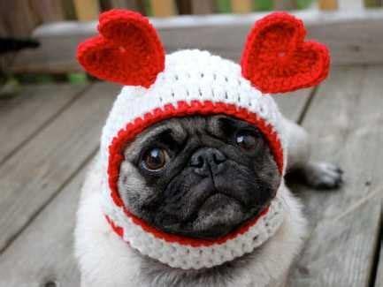 show  pet  love  valentines day veterinary