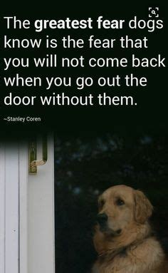 pet quotes images dog cat pets animal quotes