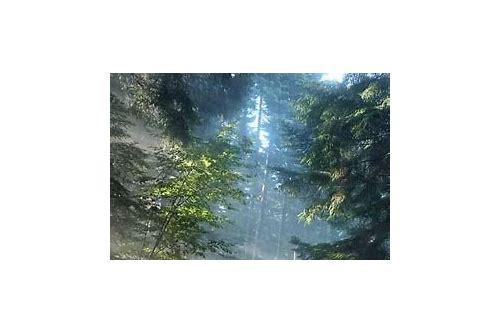 a floresta baixar grátis pcc