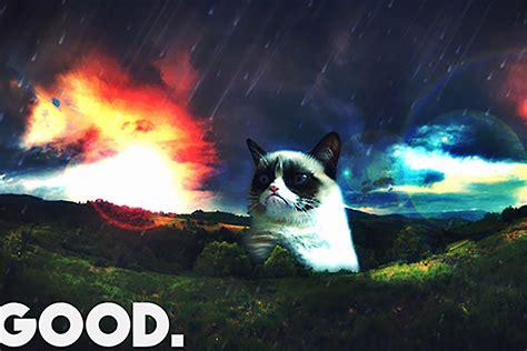 grumpy cat   thriving cat meme marketplace