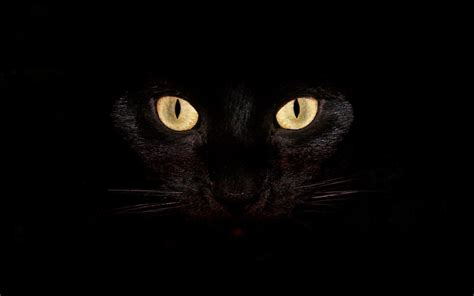 Horror Cats Wallpapers Hd Images & Pictures Hd