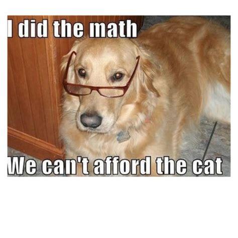 hilarious dog memes   page