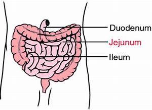 Image Gallery jejunum