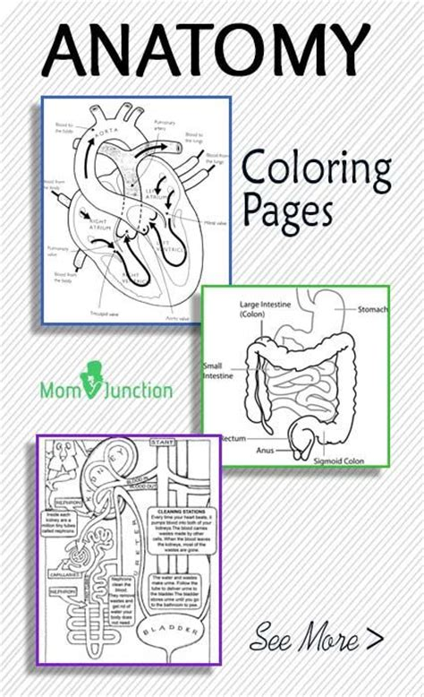 printable anatomy coloring pages